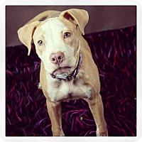 Adopt A Pet :: Jasper - Adoption Pending - West Allis, WI