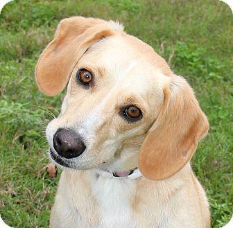 Labrador Retriever Mix Dog for adoption in Natchitoches, Louisiana - Nala