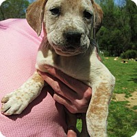 Adopt A Pet :: Ephram - Williston Park, NY