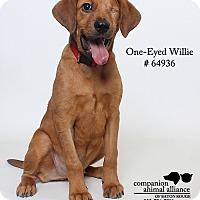 Adopt A Pet :: Willie - Baton Rouge, LA