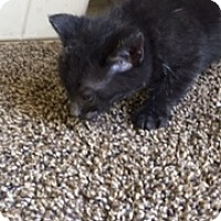 Adopt A Pet :: blk - Troy, OH