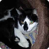 Adopt A Pet :: Cowboy - Chesapeake, VA