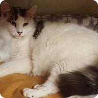 Adopt A Pet :: Max - Harleysville, PA