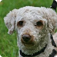 Adopt A Pet :: Cash - carlsbad, CA