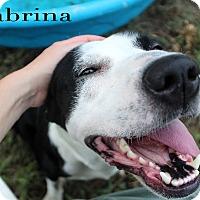 Pit Bull Terrier Mix Dog for adoption in Texarkana, Arkansas - Sabrina
