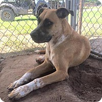 Adopt A Pet :: Scooter - Quinlan, TX