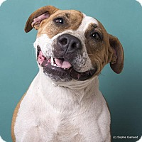 Adopt A Pet :: Maybelle - Anniston, AL