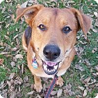 Adopt A Pet :: Hank - Overland Park, KS