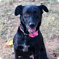 Adopt A Pet :: Bonnie - Nanuet, NY