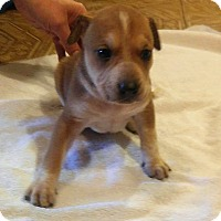 Adopt A Pet :: Grumpy - Wichita Falls, TX