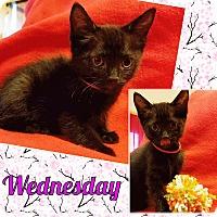 Adopt A Pet :: Wednesday - Brandon, FL