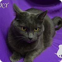 Domestic Shorthair Cat for adoption in Chicago Heights, Illinois - Spooky
