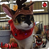 Adopt A Pet :: Layla - Washington, PA