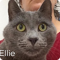 Adopt A Pet :: Ellie - Great Neck, NY