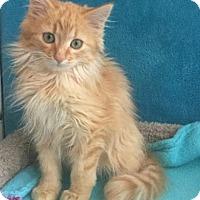 Adopt A Pet :: Terminator - Mesa, AZ