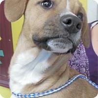 Adopt A Pet :: Savannah - Waupaca, WI