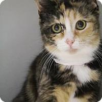 Adopt A Pet :: Sherry $20 - Lincolnton, NC
