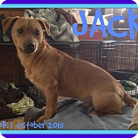 Adopt A Pet :: JACK - Middletown, CT