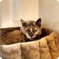 Adopt A Pet :: Autumn - Ann Arbor, MI