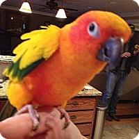 Adopt A Pet :: Gidgett - St. Louis, MO