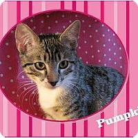 Adopt A Pet :: Pumpkin - Encinitas, CA