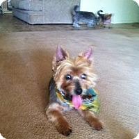 Adopt A Pet :: Harley - Goodyear, AZ
