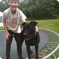 Adopt A Pet :: Dude - Wasilla, AK