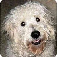 Adopt A Pet :: Roxie - Kingwood, TX