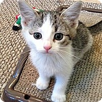 Adopt A Pet :: LORI, JAIMA, & SHERRY - 2013 - Hamilton, NJ