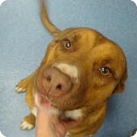 Adopt A Pet :: Miranda - Gainesville, FL