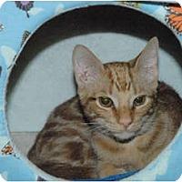 Adopt A Pet :: Quinn #1 - Lunenburg, MA