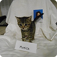 Adopt A Pet :: Monica - Maywood, NJ