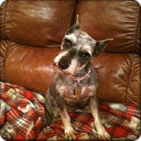 Adopt A Pet :: Petunia - Sharonville, OH