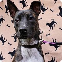 Adopt A Pet :: Kiber - Inglewood, CA