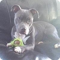 Adopt A Pet :: *URGENT* Bonnie - Van Nuys, CA