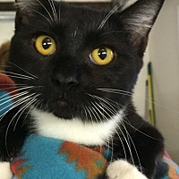 Adopt A Pet :: Magik - Chattanooga, TN