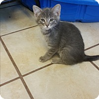 Adopt A Pet :: Asterix - Chippewa Falls, WI