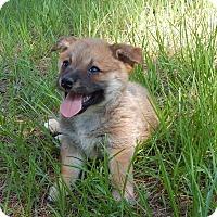 Adopt A Pet :: Poppy - Bozrah, CT