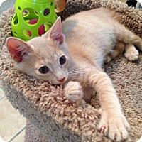 Adopt A Pet :: TOBY - Hamilton, NJ