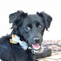Adopt A Pet :: Cleo - Oakley, CA