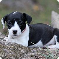 Adopt A Pet :: Ryder - Waldorf, MD