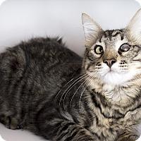 Adopt A Pet :: WINKY - Tucson, AZ