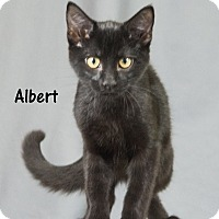 Adopt A Pet :: Albert - Oklahoma City, OK