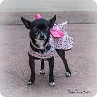 Adopt A Pet :: Kumi - San Marcos, CA