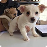 Adopt A Pet :: 5487 - Calhoun, GA