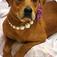 Adopt A Pet :: Lucy - Newnan City, GA