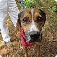 Adopt A Pet :: COPPER - Media, PA