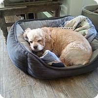 Adopt A Pet :: Nina - Dothan, AL