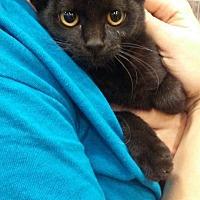 Adopt A Pet :: Deb - Levelland, TX