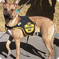 Adopt A Pet :: Sally - Gilbert, AZ